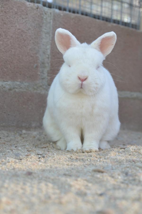 conejo4