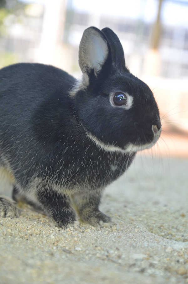 conejo8
