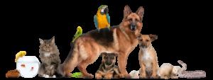 El_blog_de_las_mascotas