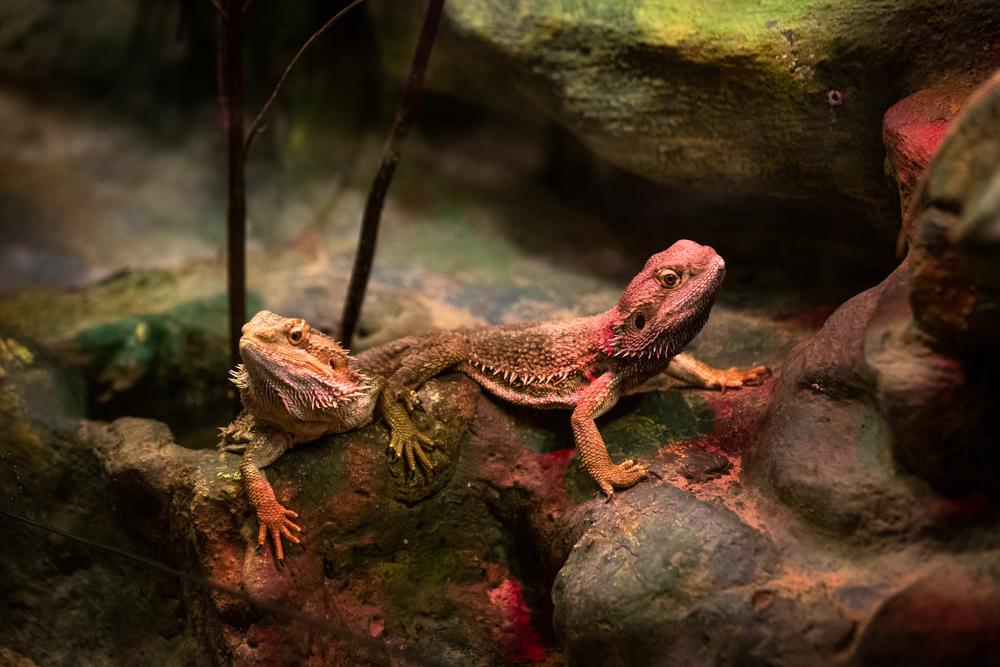 6 animales exóticos domésticos que puedes tener en casa
