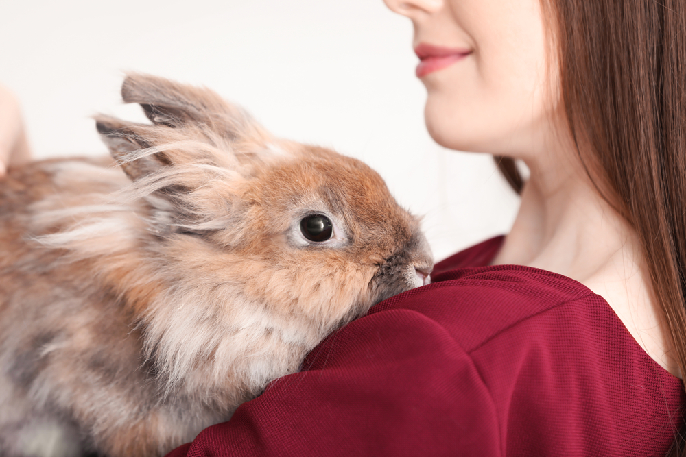 Los mejores juguetes para conejos