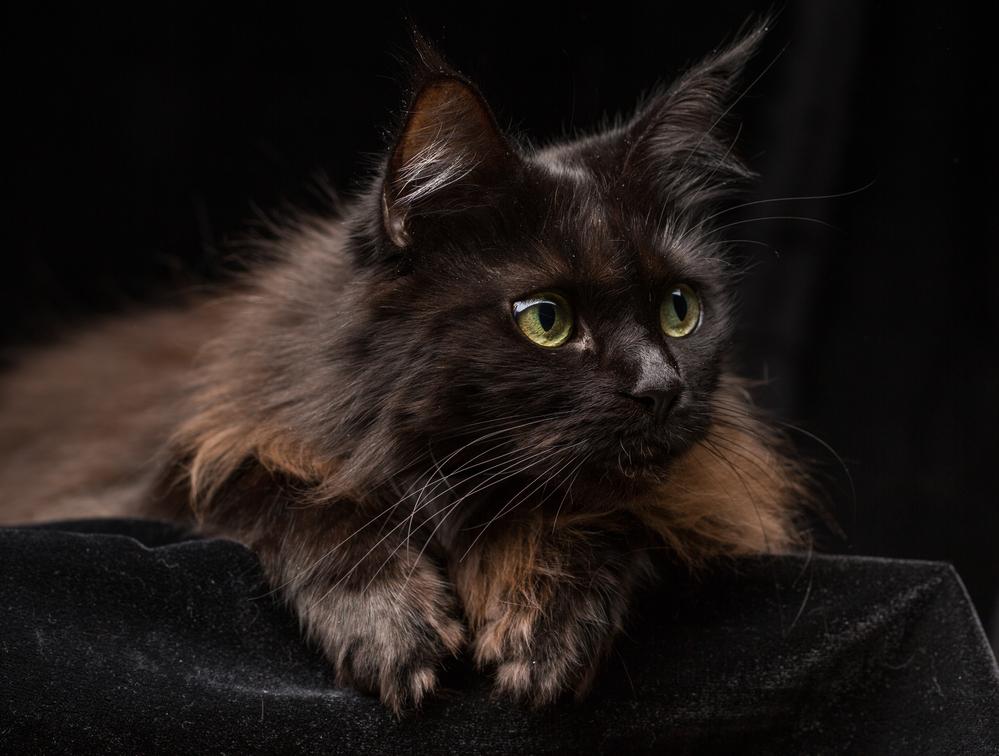 Todo sobre la personalidad y el carácternbspde los gatos