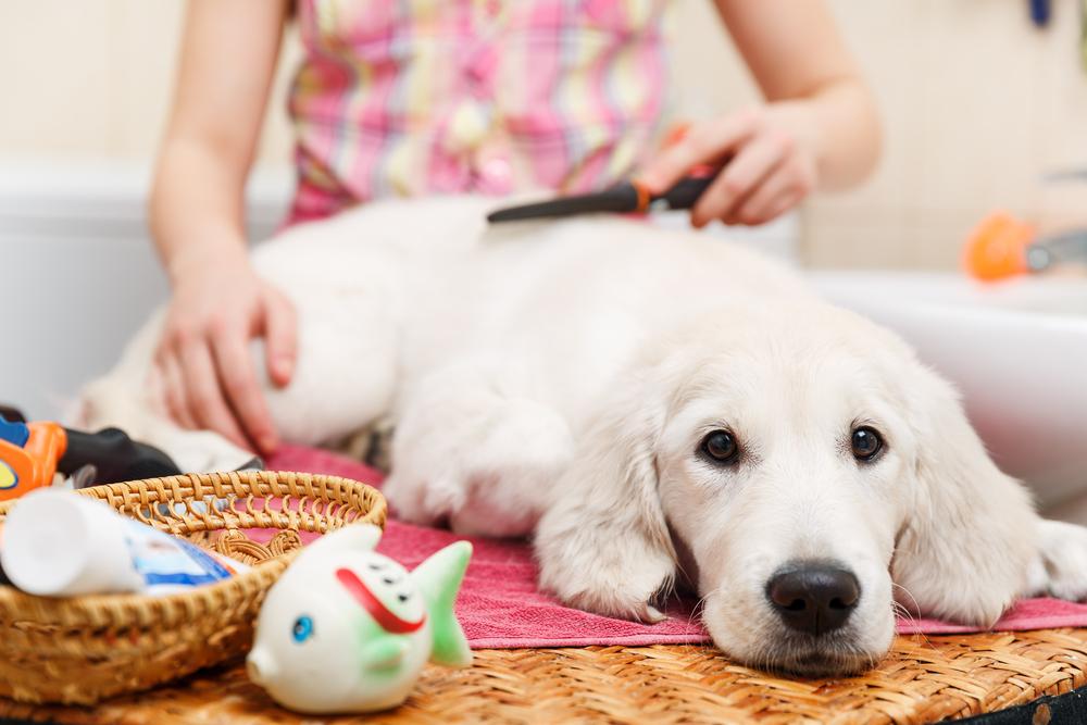 consejos para facilitar el proceso de muda del pelo de tu perro