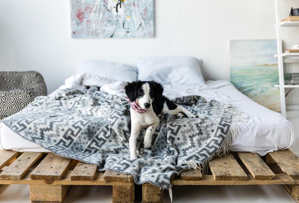 Es aconsejable dejar dormir a tu perro en tu cama