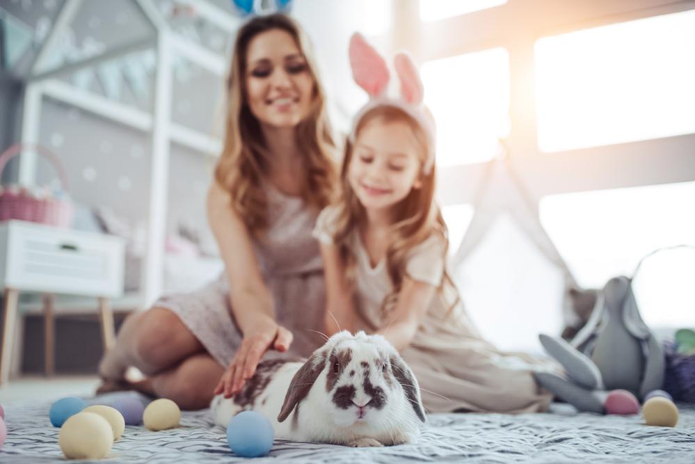 6 consejos para mantener a tu conejo limpio