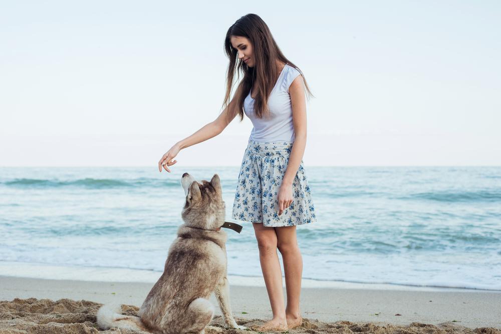 5 trucos para ensenar a tu perro a sentarse