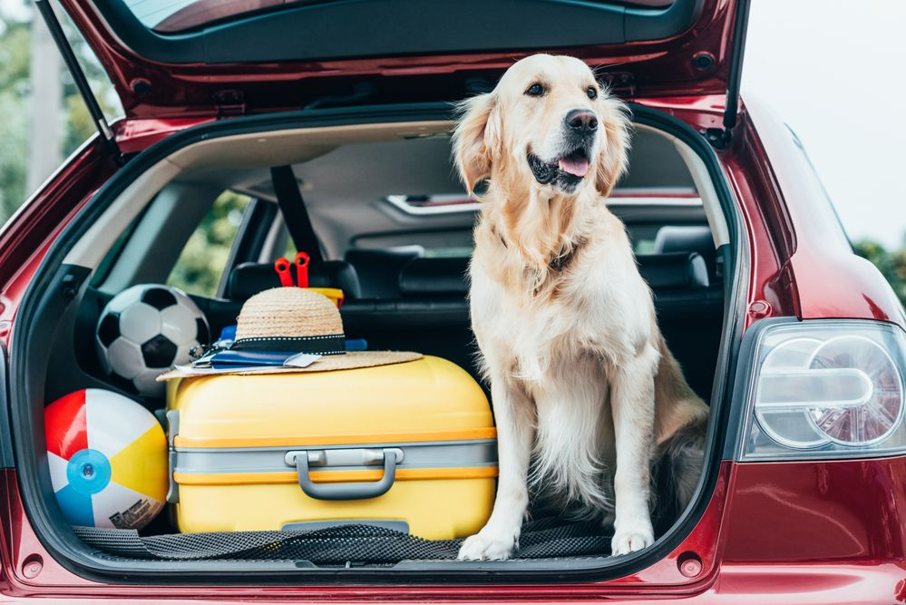 Todo lo que necesitas saber si quieres viajar con perros
