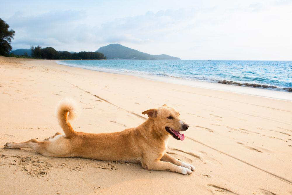 ¿Como-aliviar-el-calor-en-nuestros-perros-en-verano