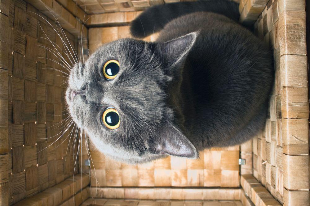 ¿Por-que-mi-gato-tiene-miedo-Descubre-las-principales-razones